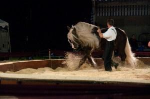 Jehol - cheval - Sciez - journées de la traction animale